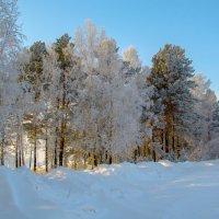 Зимний сказочный лес :: Константин Батищев