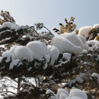 Зима :: Ульяна Загуменная
