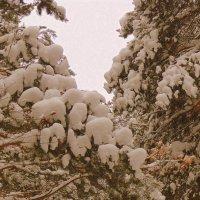 Снежные зверушки  на ветках. :: Мила Бовкун