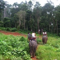 На слонах через джунгли. :: Лариса (Phinikia) Двойникова