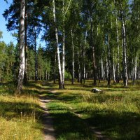 В лесу :: lapin_valerei@mail.ru