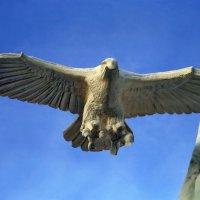 Снежный орёл на Главной площади Екатеринбурга :: Пётр Сесекин