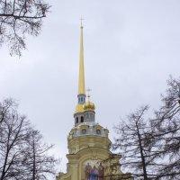 Петропавловский собор :: Sergey Lebedev