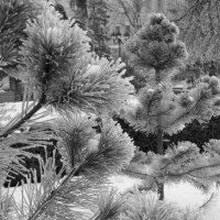 Зимние зарисовки :: Екатерина Зацаренская