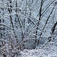 Снег на ветвях :: Aнна Зарубина