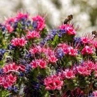 Пчелка :: Илья Ткачев