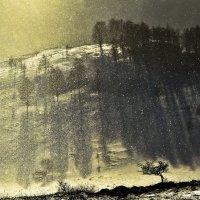 Снег сквозь солнце :: Сергей Жуков