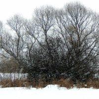 Снег идёт :: Владимир Самойлов