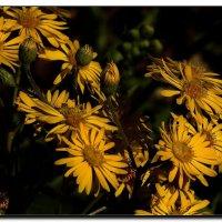 Зимние цветы. :: Leonid Korenfeld