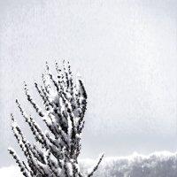 зимние растения :: Дмитрий Денисов