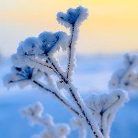Зимняя акварель :: Константин Батищев