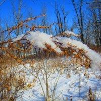 Пушистый снежок. :: ❅ Татьяна ❅