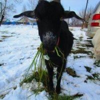 Что нам снег.... :: Татьяна ❧