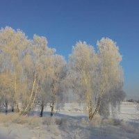 Берёзы, в серебре морозного дня))) :: Владимир Звягин