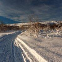 По свежевыпавшему снегу :: Ольга