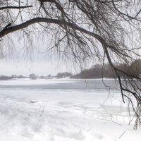 Зимняя серая тоска :: Константин Тимченко