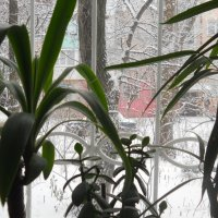 За окном буйствует зима, а нам неплохо :: Галина