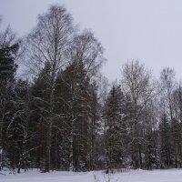 Зимний лес :: Александр Зенченко