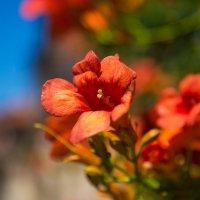 краски лета :: Мария Корнилова