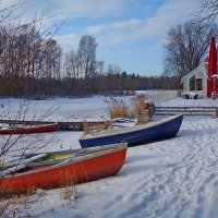 Зимний день на озере :: Galina Dzubina