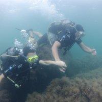 Отдых на море, Крым. Дайвинг. Подводная съёмка-8. :: Руслан Грицунь