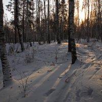 Навстречу солнцу по лыжне... :: Александр Попов