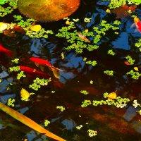 Рыба :: Анна Былина