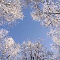 Небо в деревьях :: Татьяна Шторм