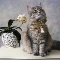 Фотосессия с орхидеями :: Ирина Приходько