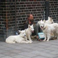 Пастух без работы :: Tanja Gerster