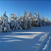 Зима в январе :: Leonid Rutov