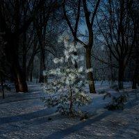 В лесу родилась елочка... :: Александр Бойко