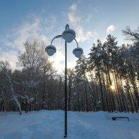 Зимний парк :: Сергей Тагиров