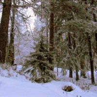 В лесу зима.. :: Галина Полина