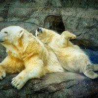 С мамой :: Михаил Танин