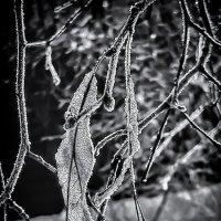 Еще немного зимнего кружева... :: Копыткина Юлия