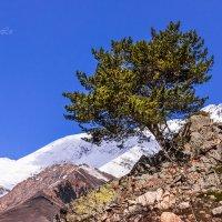 Одинокое дерево в горах Кавказа. :: Вячеслав Ложкин