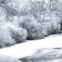 Раннее утро в парке :: Татьяна Каримова