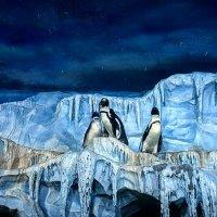 Пингвины. :: Виктория Черненко