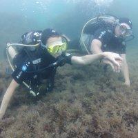 Отдых на море, Крым. Дайвинг. Подводная съёмка-15. :: Руслан Грицунь