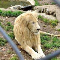 В Белградском зоопарке :: Денис Кораблёв