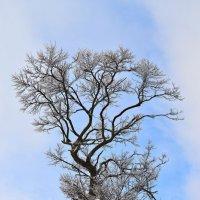 Дерево в стеклярусе :: Nina Streapan