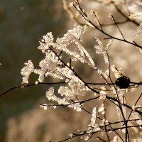 хрустальные цветы :: Александр Прокудин