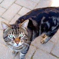 Не наш кот,но наш гость... :: Герович Лилия