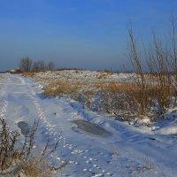 В начале зимы. :: Galina S*