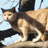 я не белка,а кошка или кот :: Олег Лукьянов