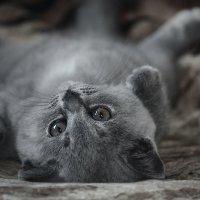 ..для моей кошки, моя жизнь вроде телевизора.. :: Лилия .