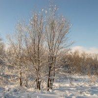 В лесу :: Павел Кореньков