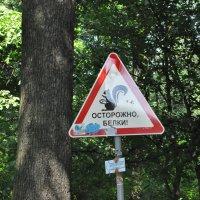 В парке на Елагином острове :: Ольга Васильева