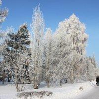 Зима в огроде :: раиса Орловская